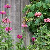 Gardening 2011 - 100_9501.JPG