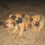 fotos caninas 299.jpg