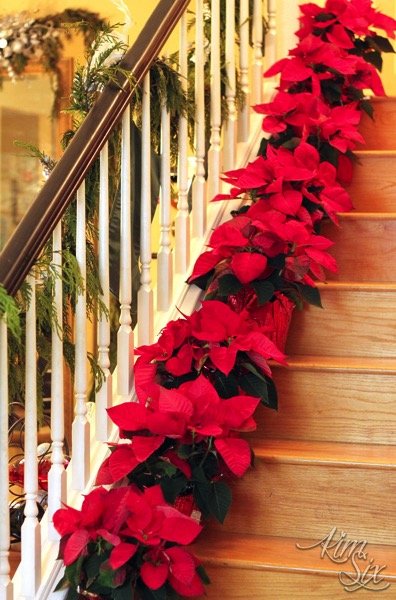 Poinsettias on staircase