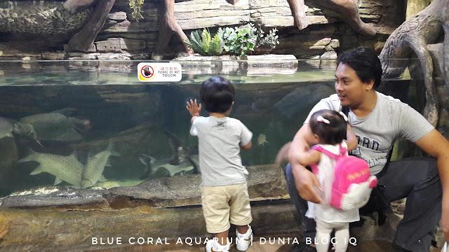 Blue Coral Aquarium Di Menara Kuala Lumpur - Berbaloi Atau Tidak?