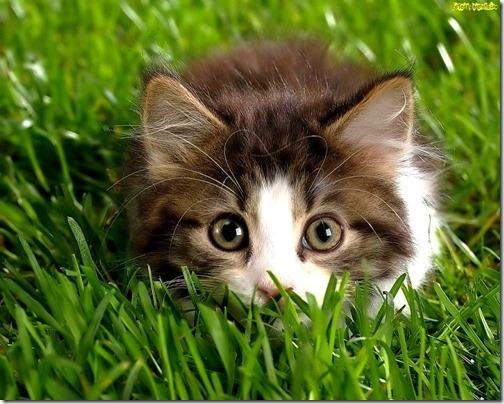 22 fotos de gats (15)