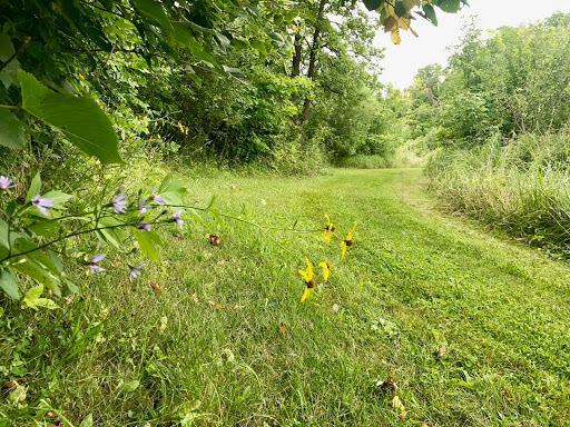 Wild flowers along the side of Mother North Star. The mowers have been busy keeping the trails mowed!