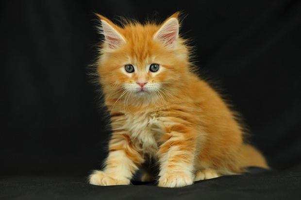 Χαριτωμένα γατάκια (2)
