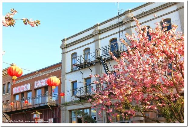 160410_Victoria_Chinatown_0023