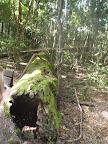 In diesem Baum lebt eine Funnel-Web-Spider (ziemlich giftig)