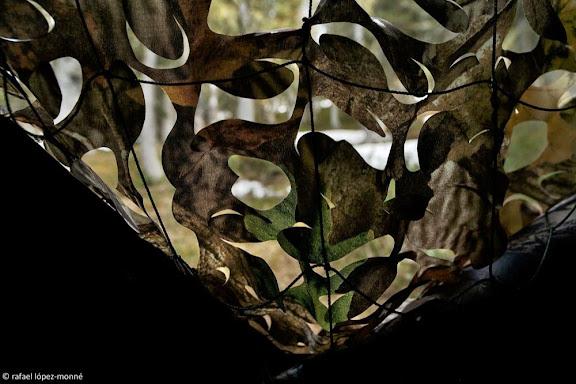 Hide d'observació al cantader de gall fer (Tetrao urogallus aquitanicus) a les muntanyes de Montgarri.Naut Aran, Val d'Aran, Vall d'Aran, Lleida