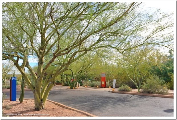 12/28/15: Desert Botanical Garden, Phoenix, AZ (part 1)