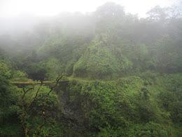 Hiking through the lush Maui hillside.