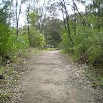 Heading through the bush (24117)