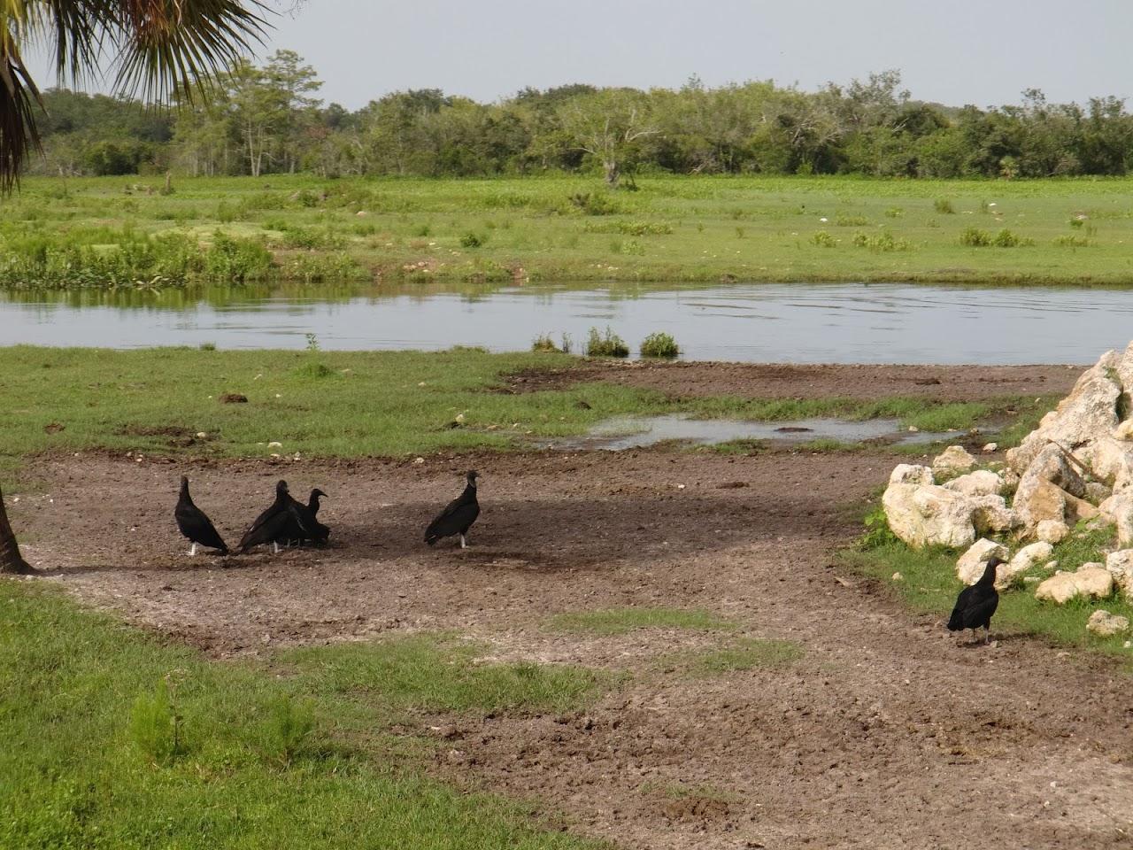 Seabase 2012 - 2012%7E07%7E25 61 Vultures.jpg