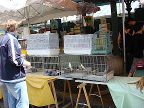 "In this square between streets was this ""stand"" selling birds of all kinds."