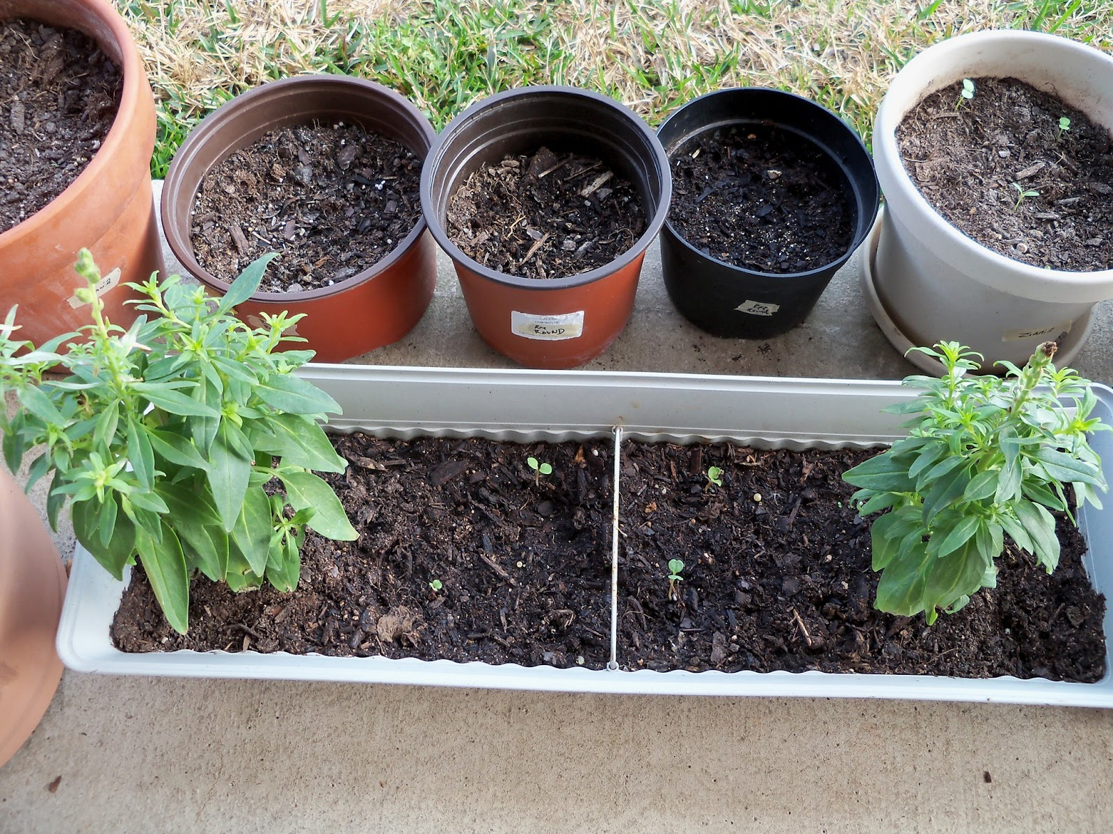 Gardening 2011 - 100_6666.JPG