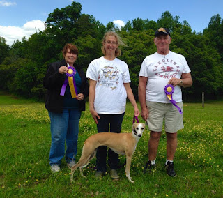 May 22, 2016  Moon going Back to Back BOB wins at  MAHA's AKC Lure Coursing Trial Reidsville, NC