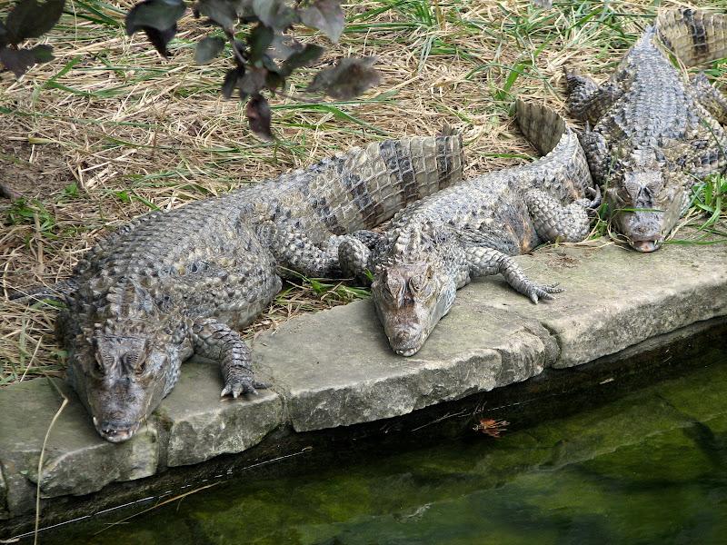 Warszawskie zoo - img_6323.jpg