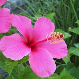 Gardening 2009 - 101_3820.JPG
