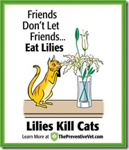 Friends don't let friends eat lilies