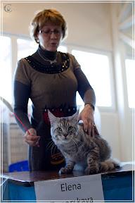 cats-show-25-03-2012-fife-spb-www.coonplanet.ru-004.jpg