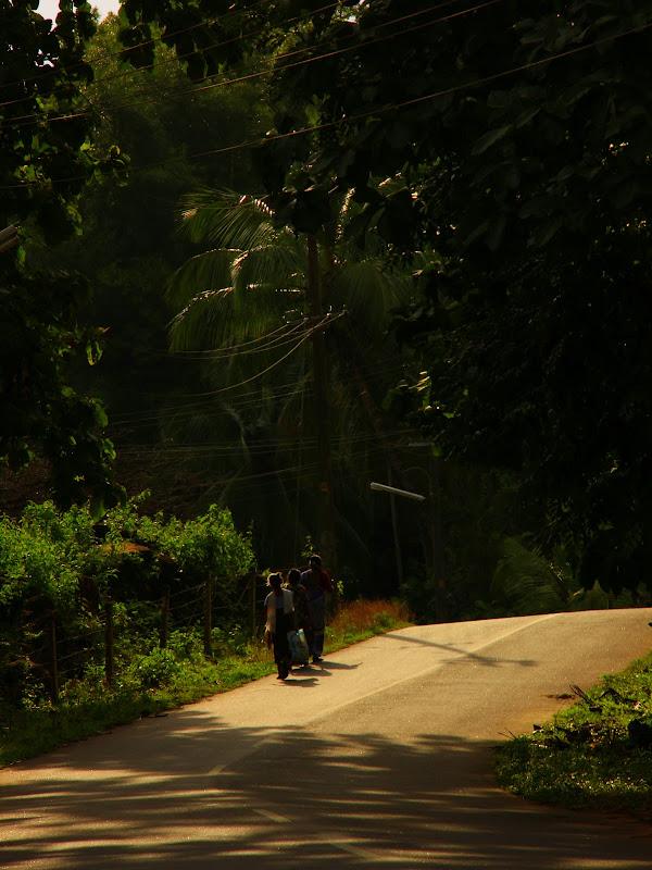 #Travelbloggerindia #Travelblog #keralatravelblog #keralatourism #palghat