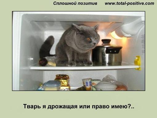 Кот сидит в холодильнике