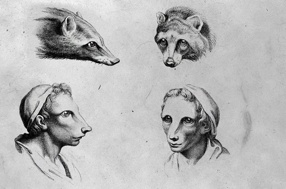 charles-le-brun-physiognomic-heads-1