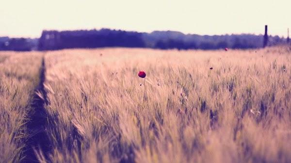 landscapes%2Bnature%2Bgrass www.wall321.com 92 10 điều mà bạn cần làm trước nghịch lý cuộc đời
