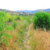 weed-patch-IMG_1015.jpg