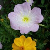 Gardening 2013 - 115_5984.JPG