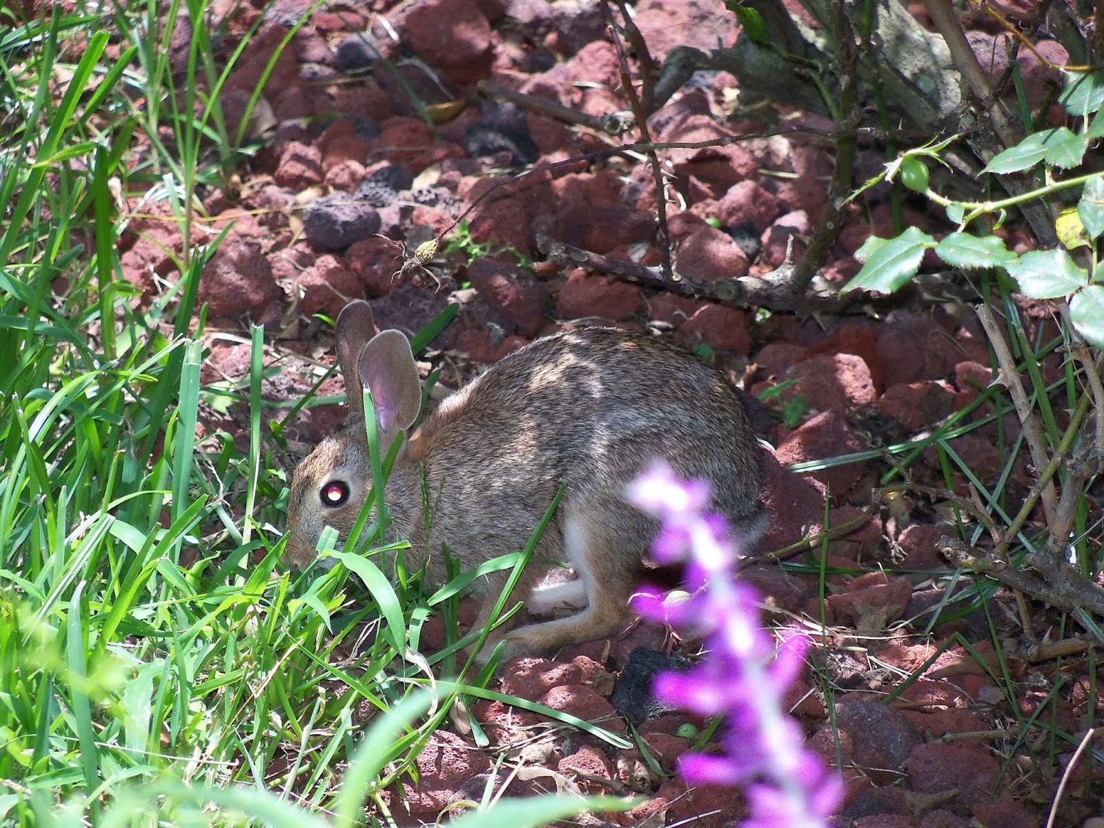Gardening 2015 - 116_9050.JPG