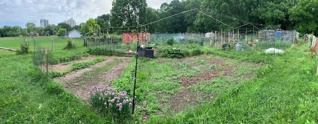 Panoramic view of two community garden plots. the left plot has clear rows and the right has more weeds and less clear pathways.