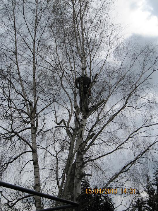 bomen snoeien en kappen - 067.JPG