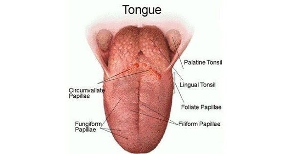 Tongue - Medicoapps Modules