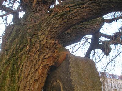 Baum und Denkmal, Verbindungen