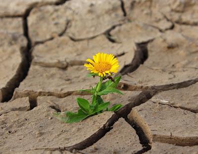 Zorlukla mücadele et, mutlu ol