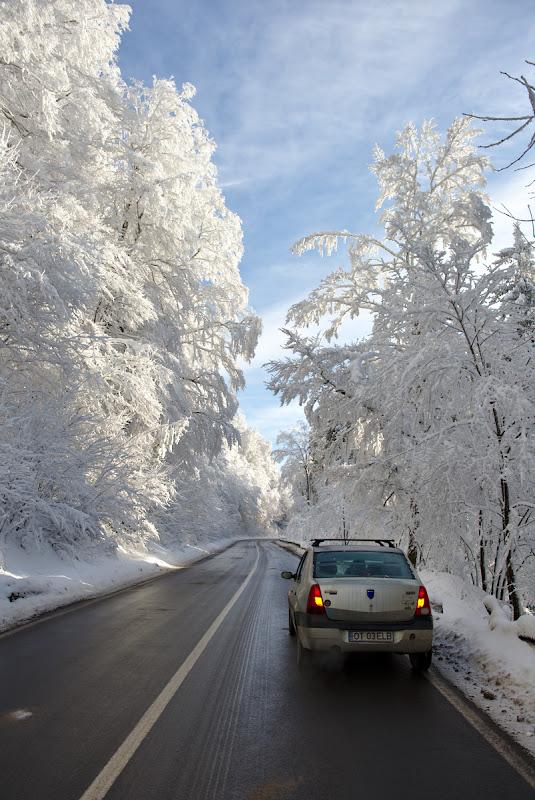 Drumul spre pasul Bratocea, printr-o padure complet tapetata de zapada.