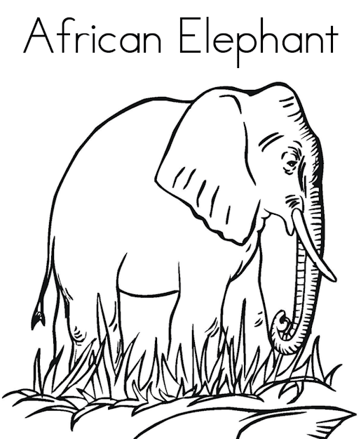 African Animal Coloring Pages Elephant