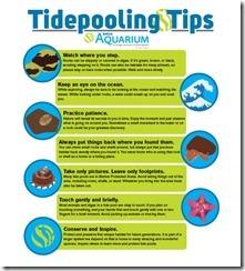 TidePoolTips