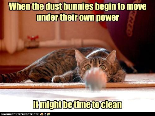 photo of a cat staring at a dust bunny as it moves towards it