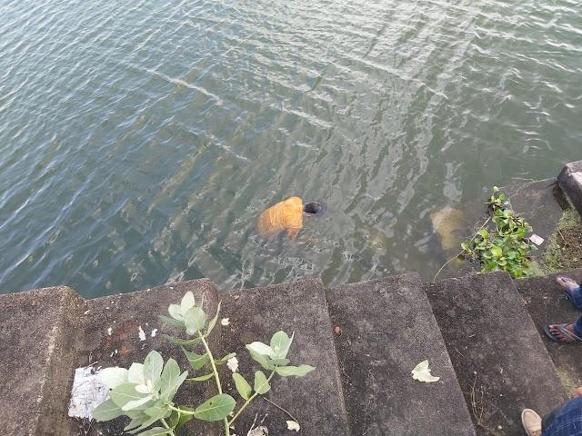 बरुआसागर स्वर्गाश्रम तालाब में उतराता मिला युवक का शव