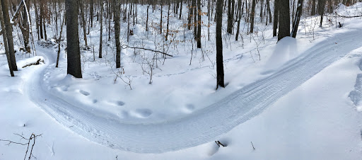 Eagle view downhill. Groomed the night before. February 10th, 2017