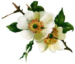 blomster%252520%2525281471%252529.png?gl=DK