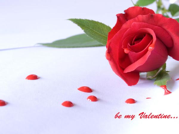 Valentinovo besplatne ljubavne slike za mobitele 640x480 čestitke free download Valentines day 14 veljača biljke cvijeće ruža