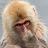 Jermaine Sterling avatar image