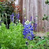 Gardening 2014 - 116_2586.JPG
