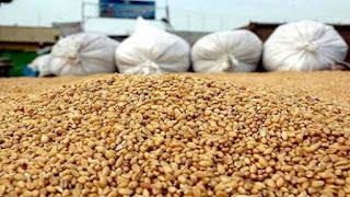 L'Algérie ne produit plus que le quart de sa consommation en céréales