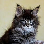 снятся кошки