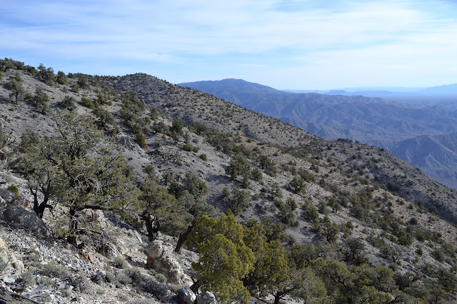 mountain side of pinon pines