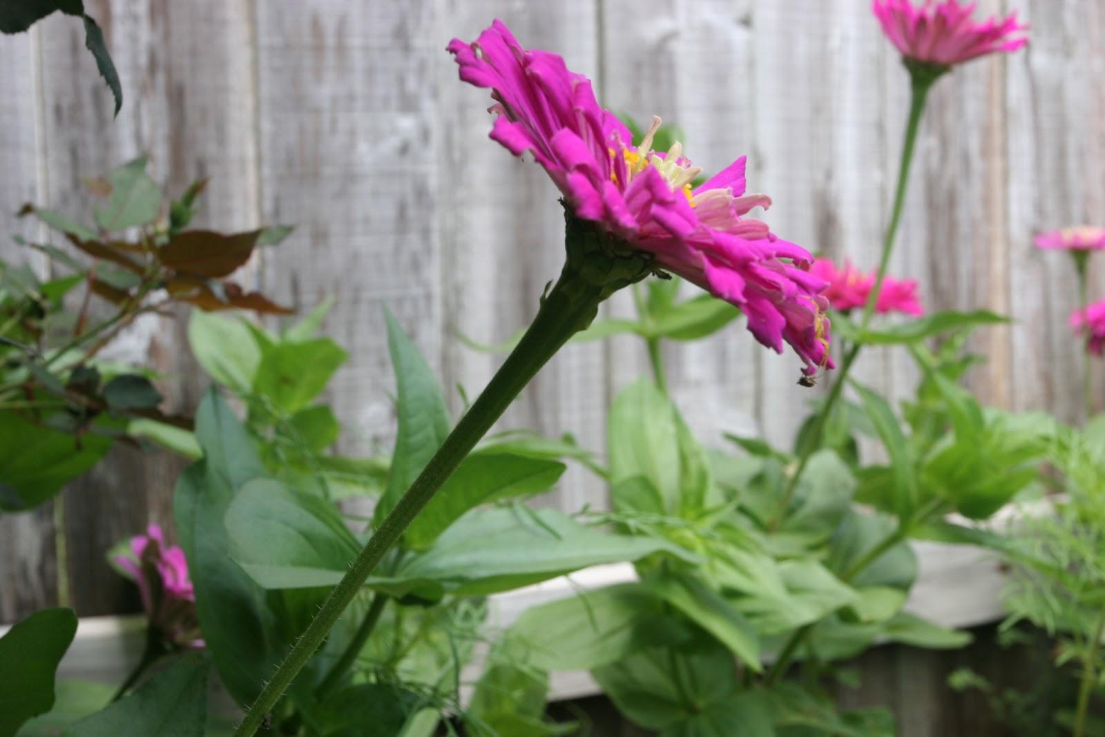 Gardening 2012 - IMG_3876.JPG