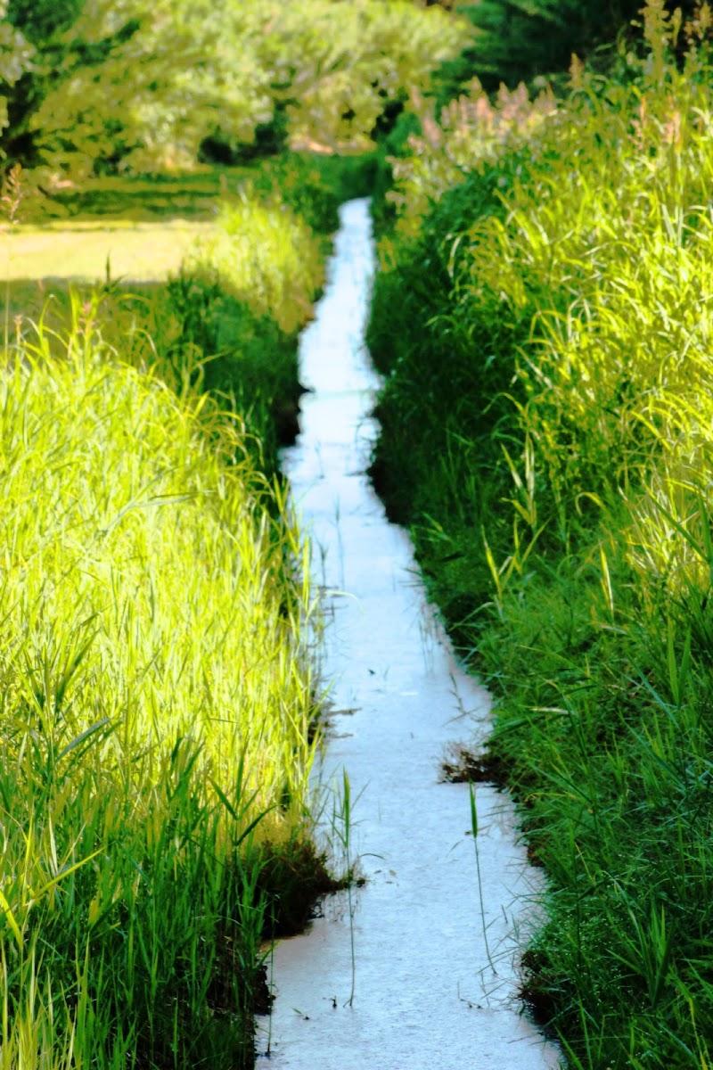 Linea d'acqua di nicolamelottophotography