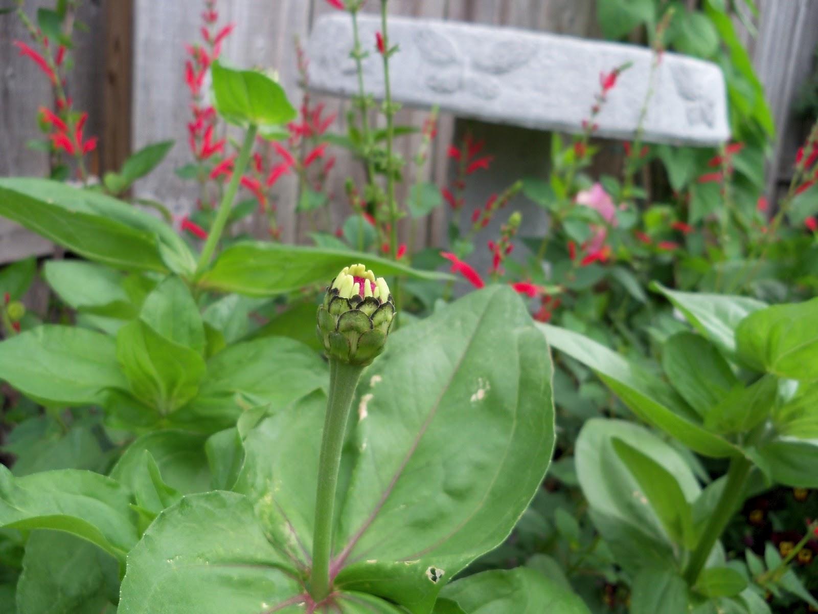 Gardening 2011 - 100_7618.JPG