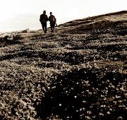 1977 гю Ночные прогулки по тундре
